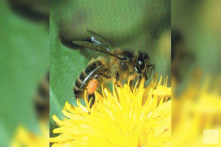 Bijen hebben imkers nodig