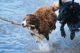 Steeds meer gemeenten schaffen hondenbelasting af