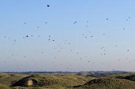 Trekvogels tellen op 3 en 4 oktober