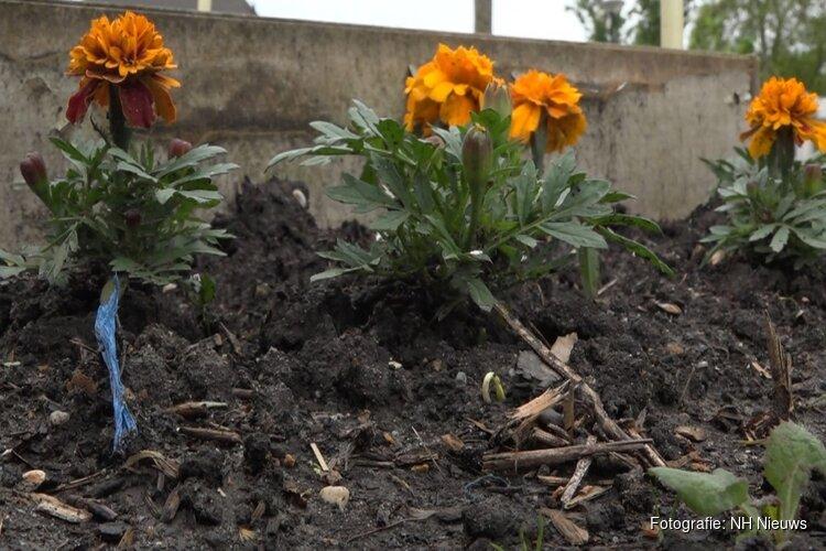 Gemeenten geven vervuilde compost gratis weg aan inwoners