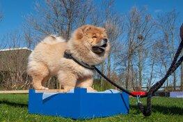 Bezoek de Kynologen Club West-Friesland op Dag van de Hond