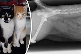 Katje Winston is meerdere keren beschoten met een luchtbuks